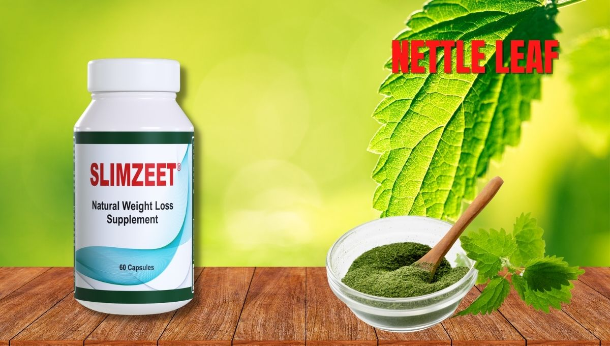 Nettle leaf for weight loss