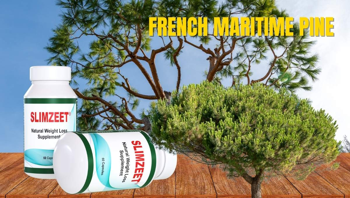 French maritime pine extract for weight loss