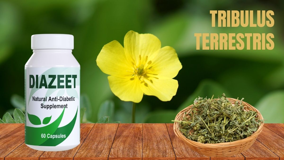 Tribulus Terrestris for Diabetes