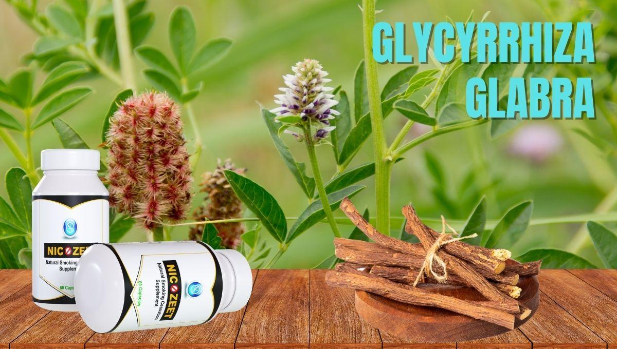 Glycyrrhiza glabra for Deaddiction